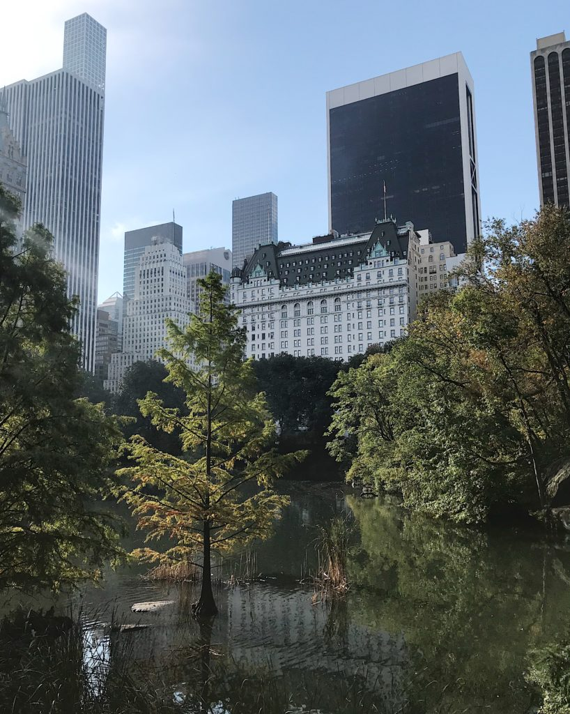 view of the plaza in central park